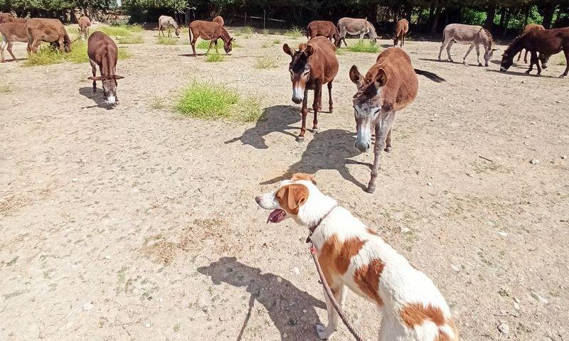 кипр пафос приют для животных