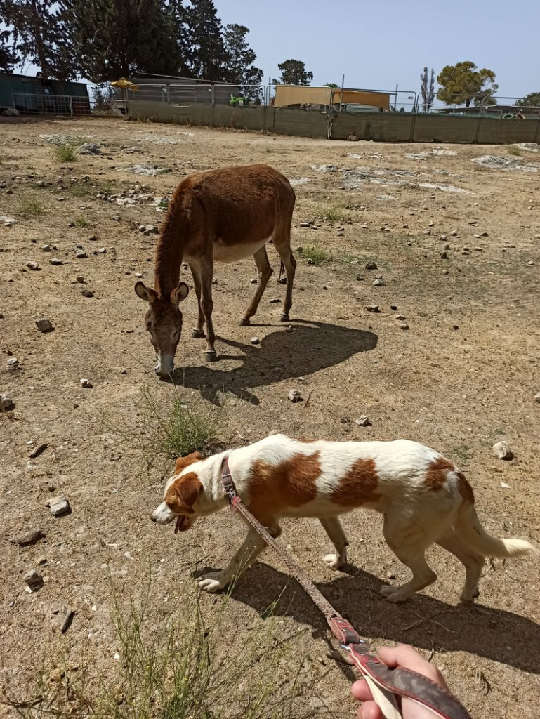 кипр приют для собак